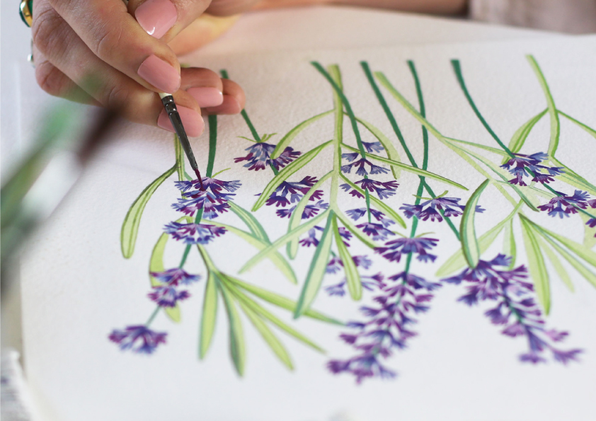 A hand painted botanical illustration of lavender